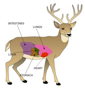 deer vitals chart