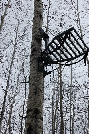 tree stand in tree