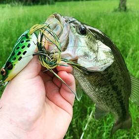 hollow body frog for topwater fishing